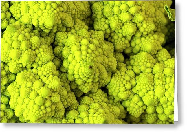 Broccoli Romanesco Close Up Greeting Card by Teri Virbickis