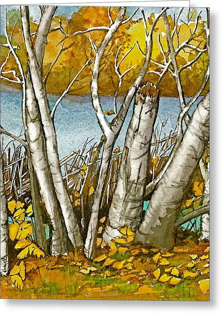 Broken Birch  Greeting Card