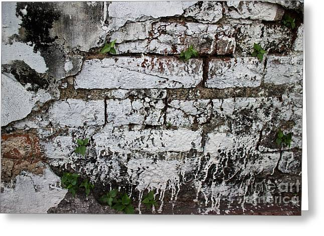Broken Stucco Wall With Whitewashed Exposed Brick Texture And Ve Greeting Card by Jason Rosette