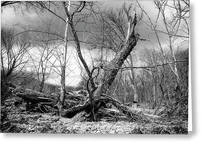 Greeting Card featuring the photograph Broken Tree by Alan Raasch