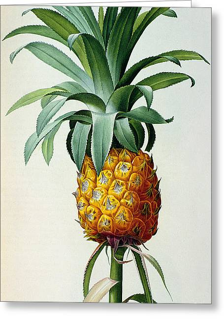 Bromelia Ananas, From 'les Bromeliacees' Greeting Card