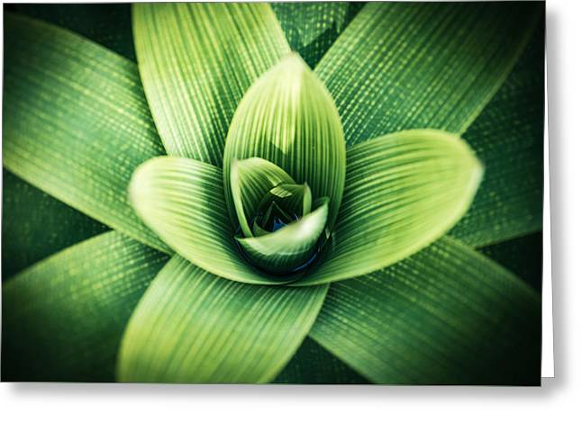 Bromelia Greeting Card