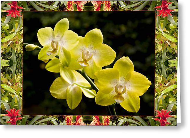 Bromeliad Orchids Greeting Card