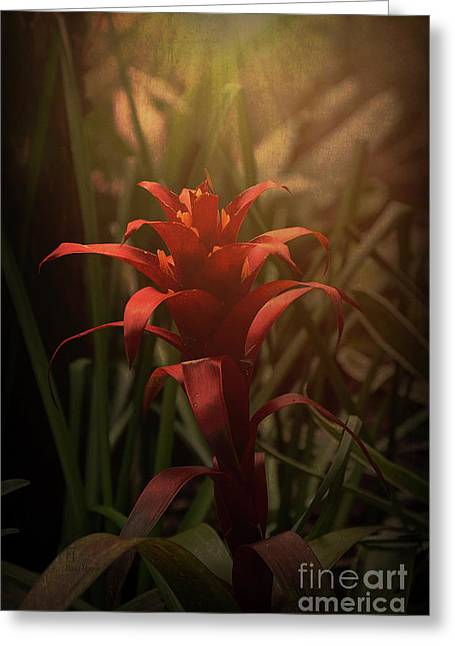 Bromeliad Sunset Greeting Card by Elaine Teague