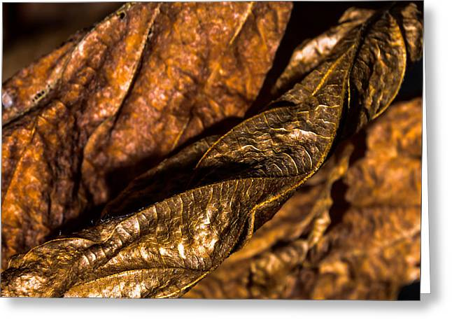 Bronze Leaves Greeting Card