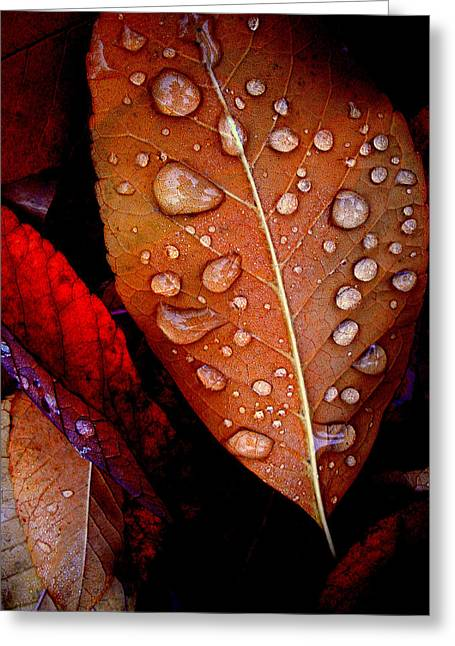Bronzed Leaf Greeting Card by The Forests Edge Photography - Diane Sandoval