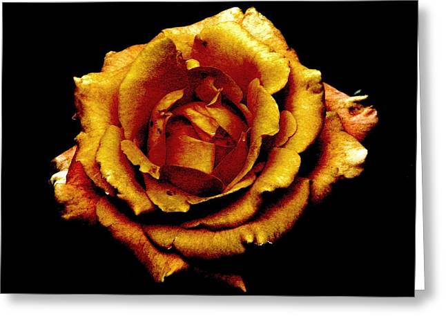 Bronzed Rose Greeting Card by Angela Davies