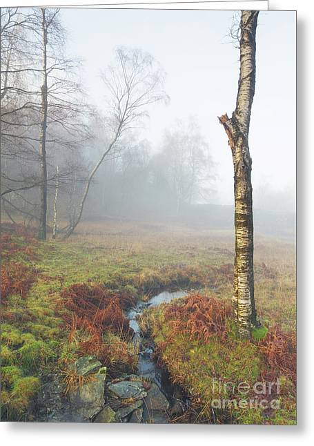 Brook In The Mist - Holme Fell Greeting Card
