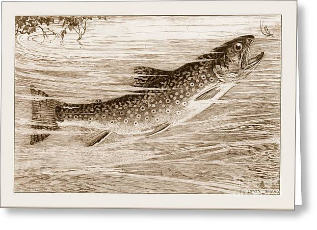 Brook Trout Going After A Fly Greeting Card by John Stephens