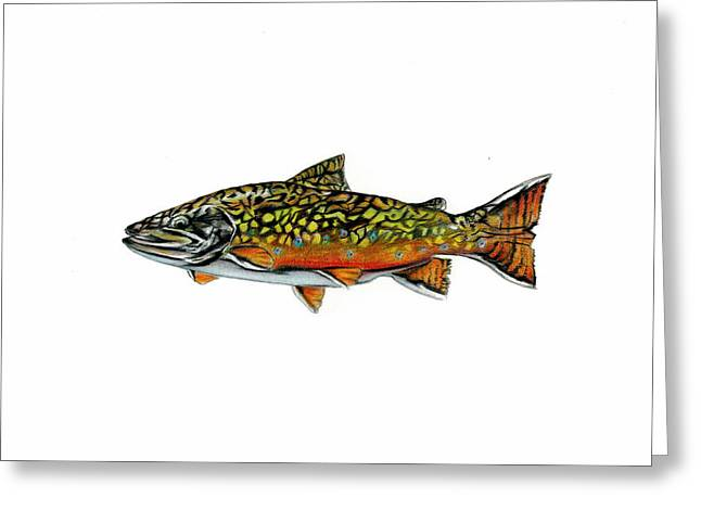 Brook Trout Greeting Card by Jim  Romeo
