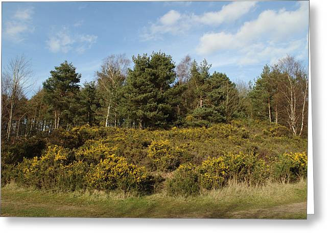 Broom Bushes On Hillside Greeting Card by Adrian Wale