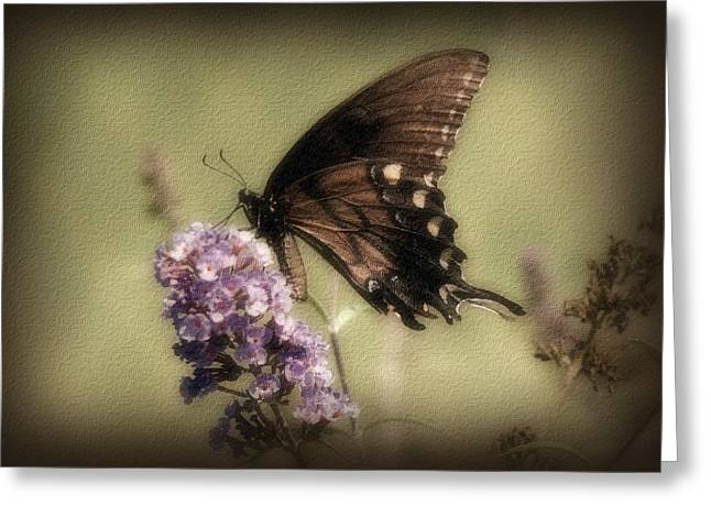 Butterfly On Flower Greeting Cards - Brown and Beautiful Greeting Card by Sandy Keeton