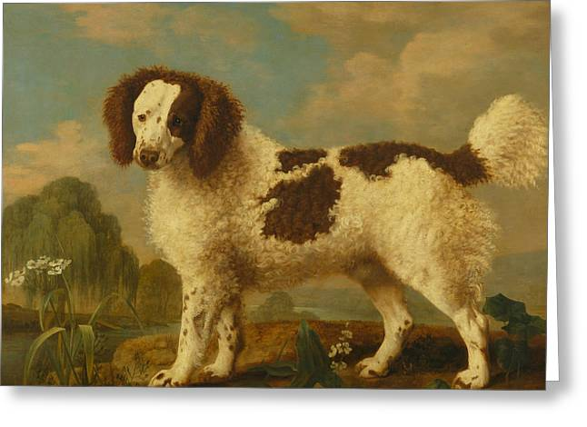 Brown And White Norfolk Or Water Spaniel Greeting Card by George Stubbs