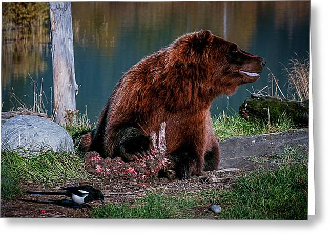 Brown Bear And Magpie Greeting Card