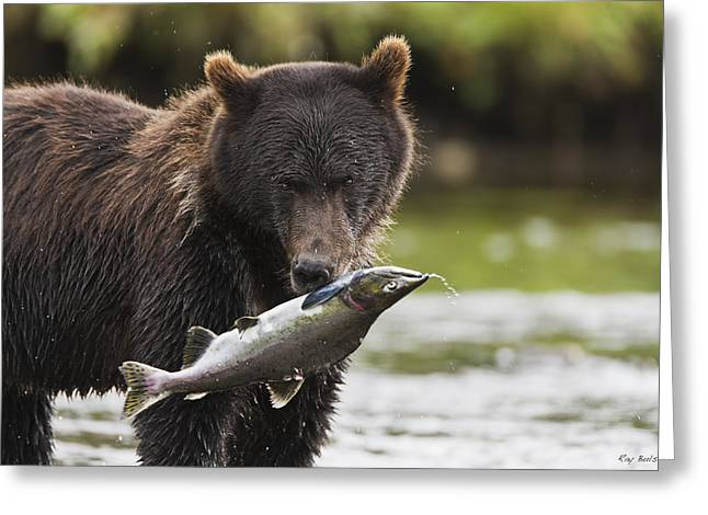 Brown Bear And Salmon Greeting Card