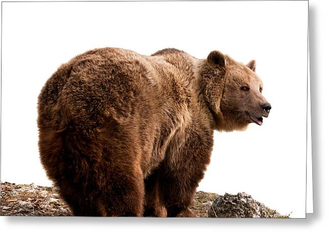 Brown Bear Greeting Card by Boyan Dimitrov
