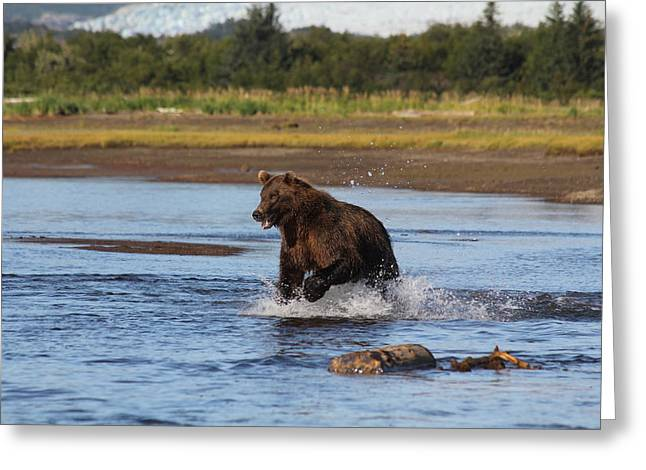 Brown Bear Chasing Fish Greeting Card