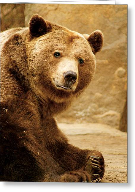 Greeting Card featuring the photograph Brown Bear by Louise Fahy