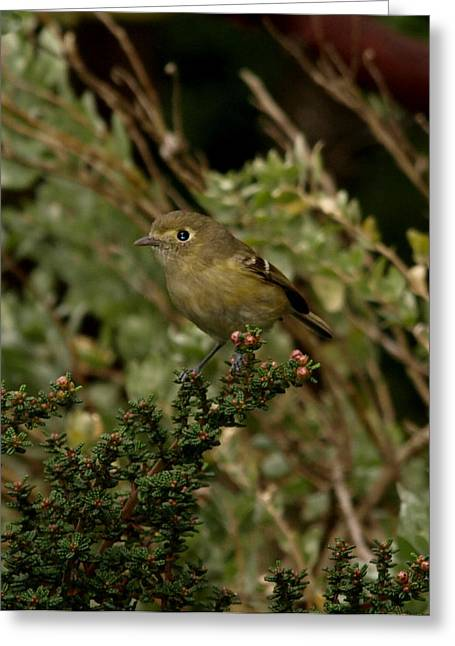 Brown Bird Greeting Card by Laura Allenby