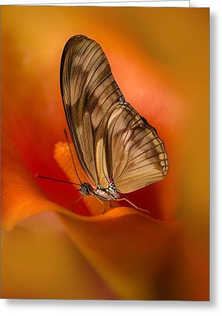 Brown Butterfly On Calia Flower Greeting Card