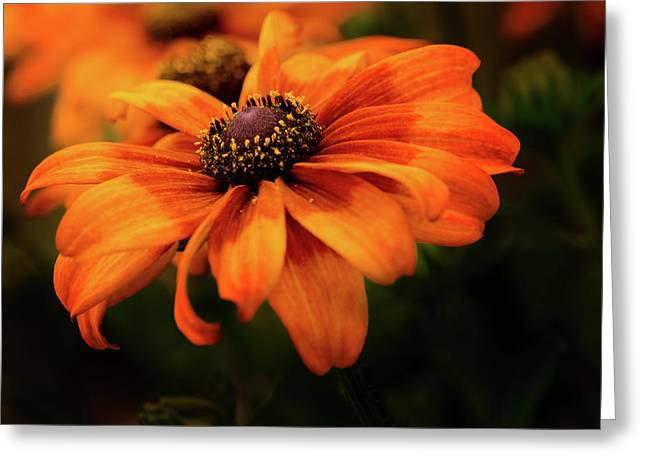 Greeting Card featuring the photograph Brown Eyed Susan by Mary Jo Allen
