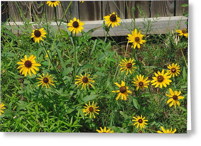 Brown Eyed Susans Greeting Card by Robyn Stacey
