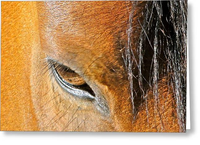 Brown-eyed Wild Horse Greeting Card by Liz Vernand