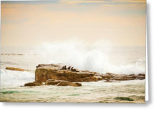 Brown Fur Seals Greeting Card by Tim Hester
