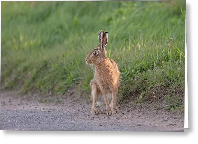 Brown Hare Listening Greeting Card