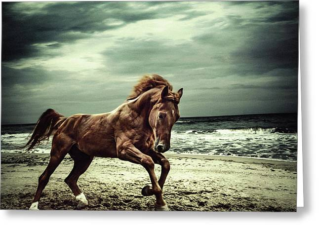 Brown Horse Galloping On The Coastline Greeting Card