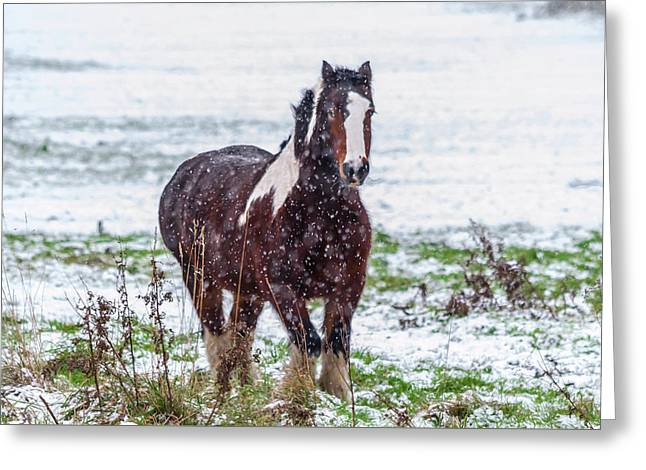 Brown Horse Galloping Through The Snow Greeting Card
