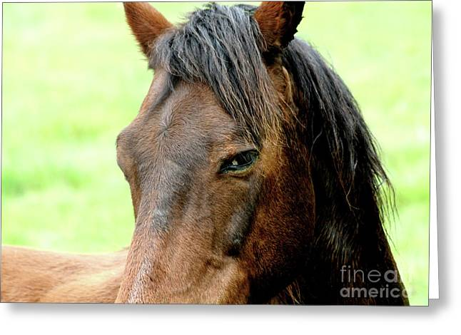 Brown Horse With Sultry Eye . R5907 Greeting Card by Wingsdomain Art and Photography