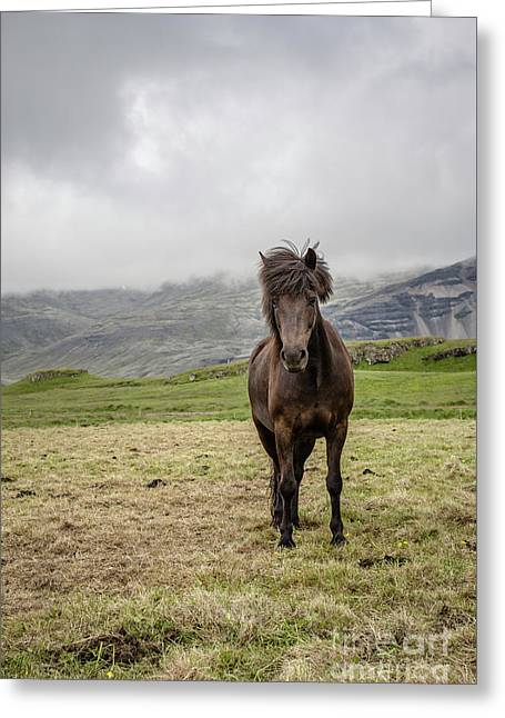 Greeting Card featuring the photograph Brown Icelandic Horse by Edward Fielding