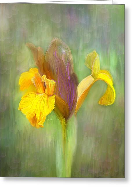 Brown Iris Greeting Card by Angela A Stanton