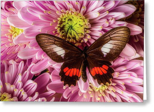 Brown Orange Butterfly Greeting Card