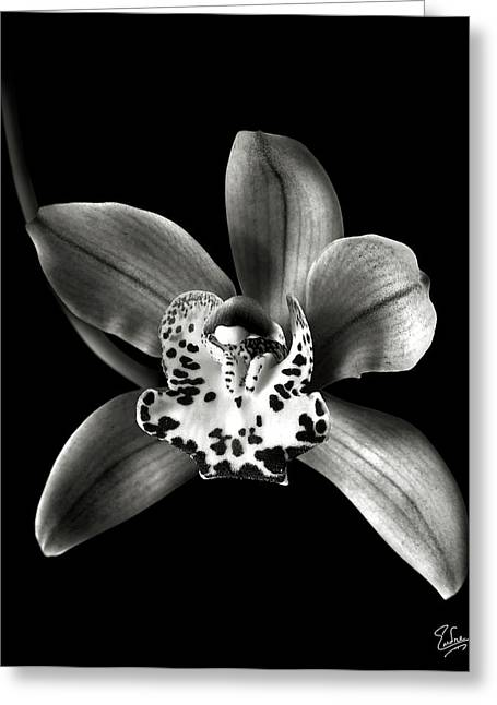 Brown Orchid In Black And White Greeting Card by Endre Balogh