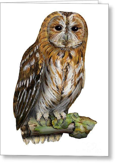 Greeting Card featuring the painting Brown Owl Or Eurasian Tawny Owl  Strix Aluco - Chouette Hulotte - Carabo Comun -  Nationalpark Eifel by Urft Valley Art