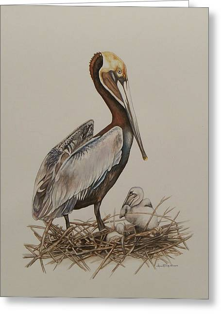 Brown Pelican And Chicks Greeting Card
