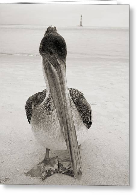 Large Bird Greeting Cards - Brown Pelican Morris Island Lighthouse Folly Beach SC Greeting Card by Dustin K Ryan