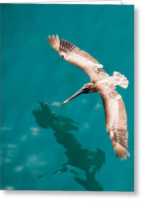 Brown Pelican Offshore Greeting Card by Bill Perry