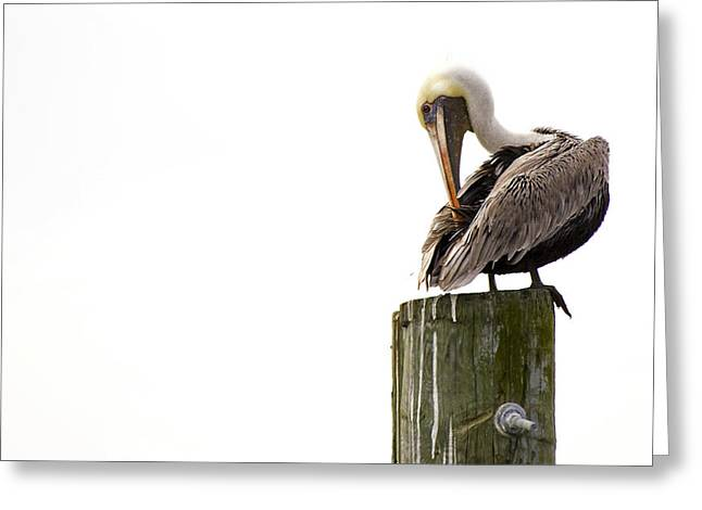 Brown Pelican On Piling Greeting Card