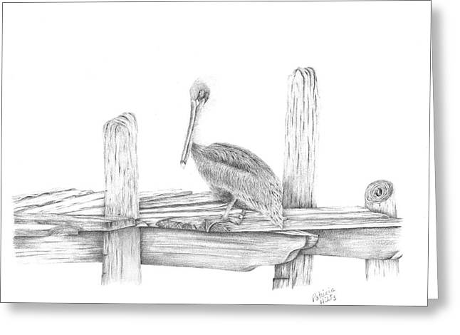 Brown Pelican Greeting Card by Patricia Hiltz