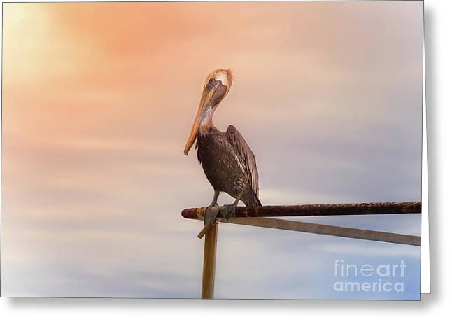 Brown Pelican Sunset Greeting Card