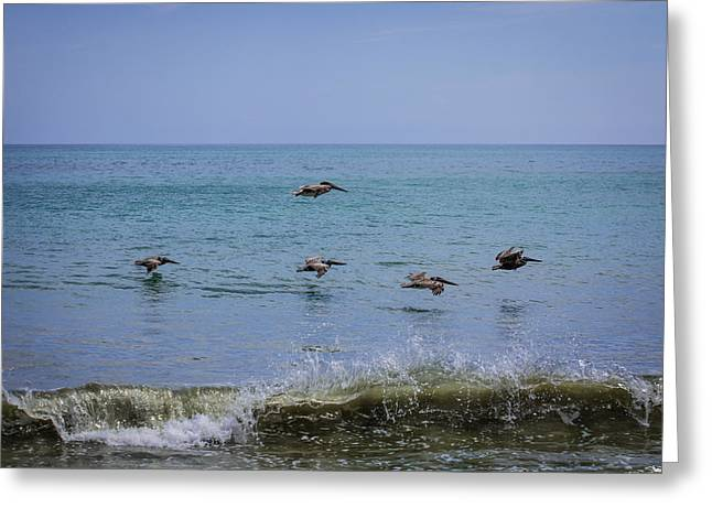 Brown Pelicans Over The Ocean Greeting Card