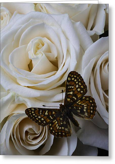 Brown Spotted Butterfly Greeting Card