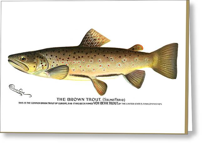 Brown Trout Greeting Card by Sherman Foote Denton