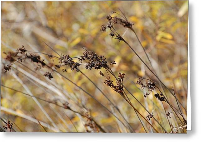 Brown Wildgrass Greeting Card by Jean Booth