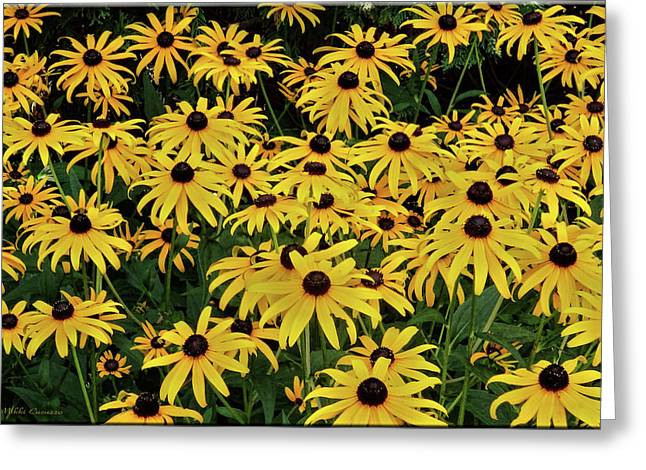 Browneyed Susans Greeting Card by Mikki Cucuzzo