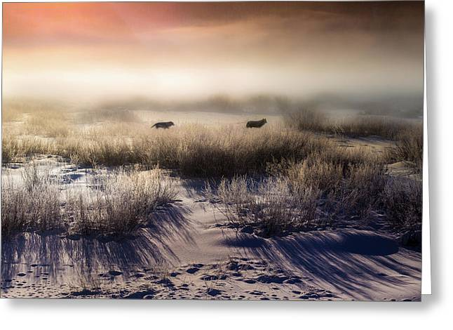 Brumous Willow Bed // Greater Yellowstone Ecosystem Greeting Card