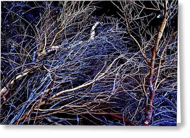 Brush Pile 2 Greeting Card by Bonnie See